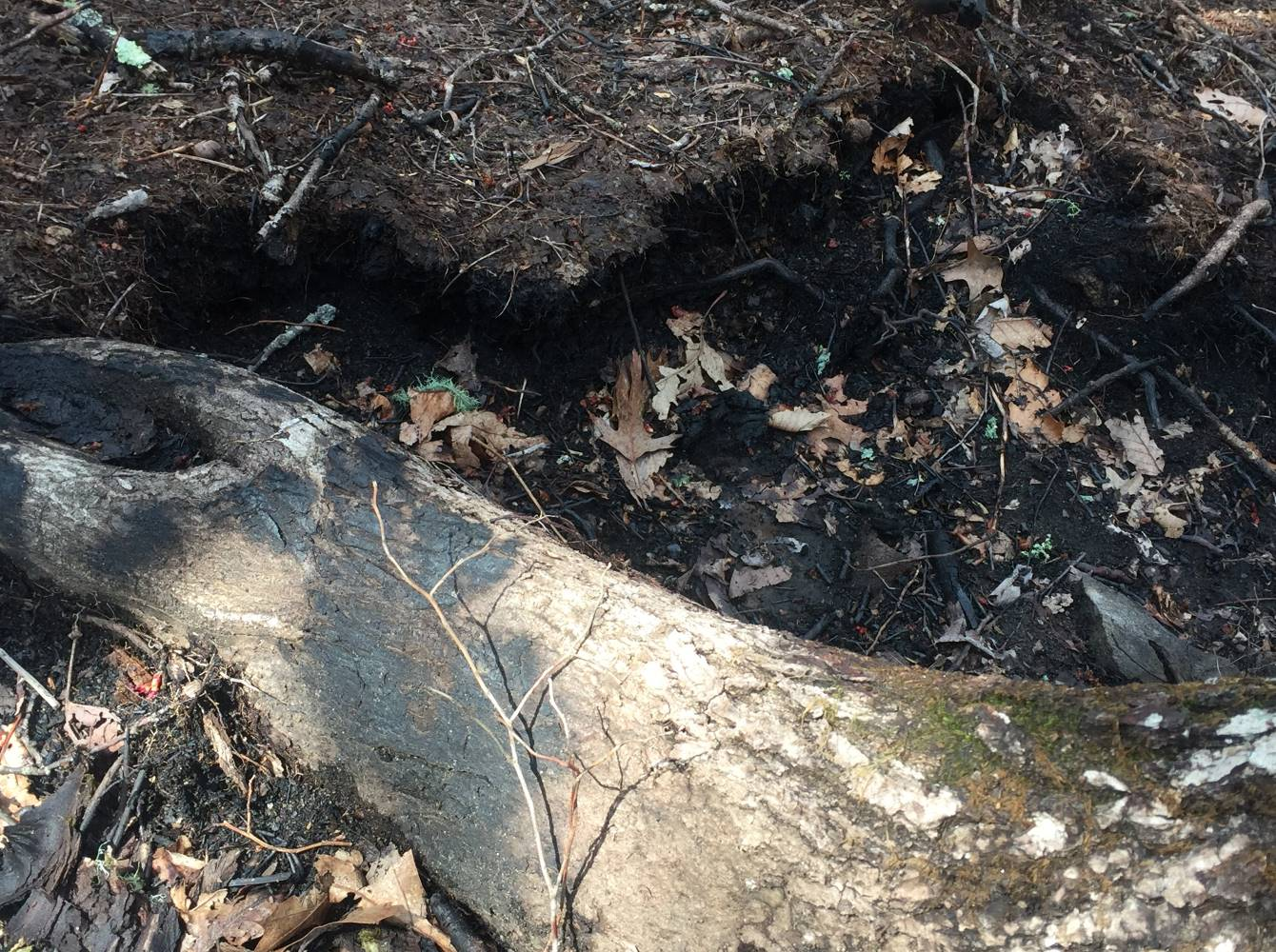 Figure 2 A Deep Hole Burned by the Rock Mountain Fire in the Organic 'Duff' Layer