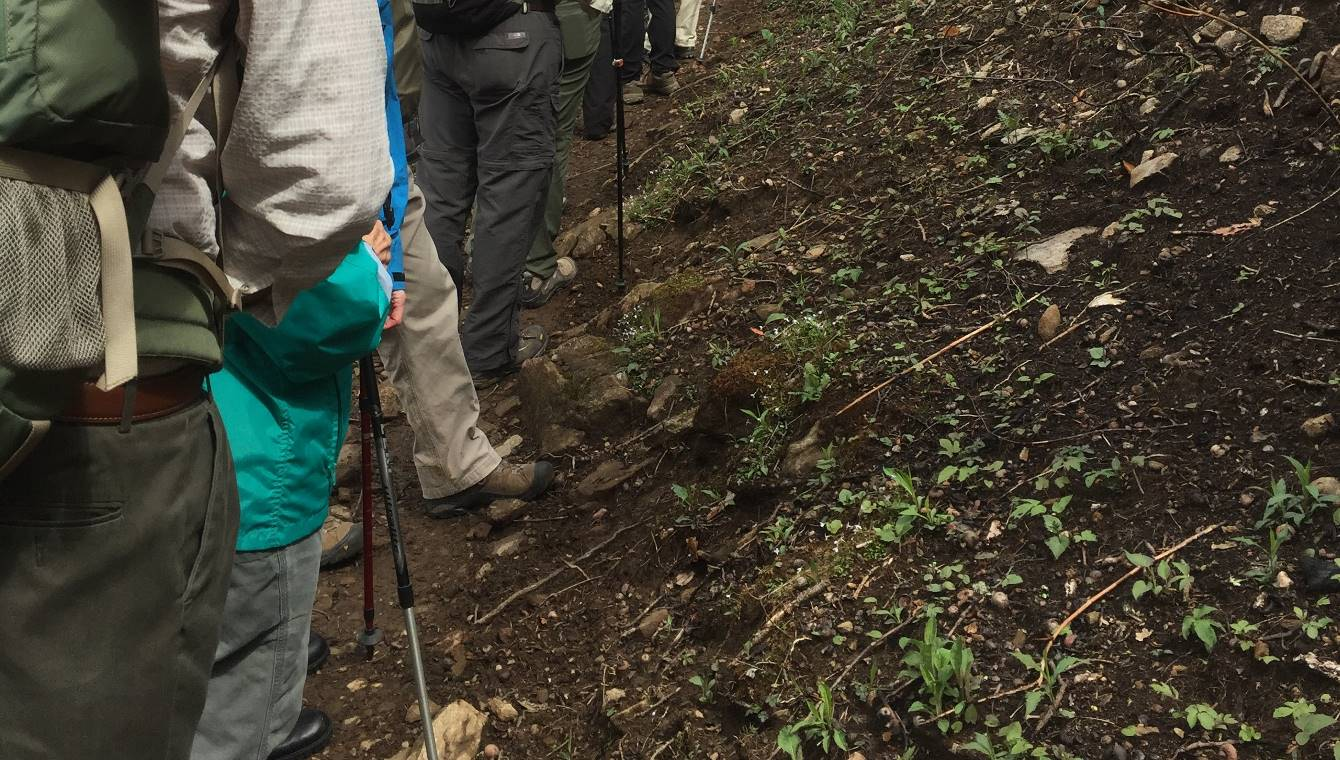 Figure 3 Hikers Considering the Post-Fire Emergence of Houstonia sp