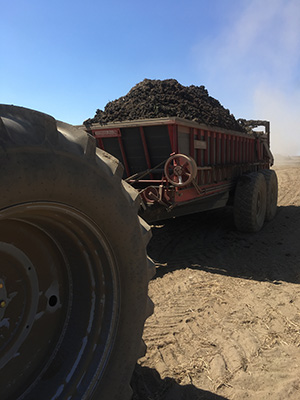Class B biosolids are used to fertilize 90,000 acres of dryland wheat fields managed by over 100 landowners in the Boulder Park area of Washington state, USA. (Photograph by Nicholas C. Kawa).
