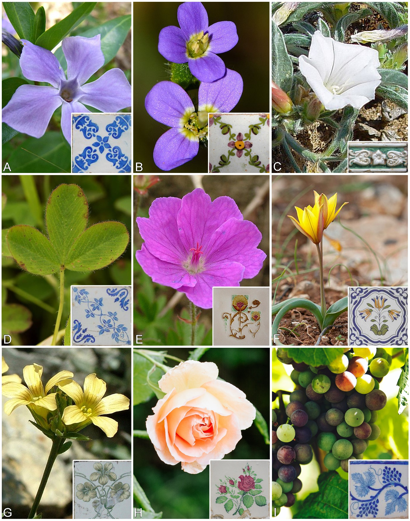 Nine images of plants, with an inset of a Portuguese tile depicting each plant respectively.